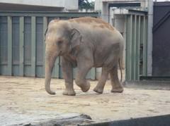 Elephant20100618-1.JPG