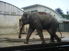 Elephant20100618-5.JPG