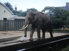 Elephant20100618-6.JPG