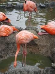 Flamingo20100618-1.JPG