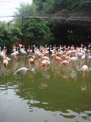 Flamingo20100618-2.JPG