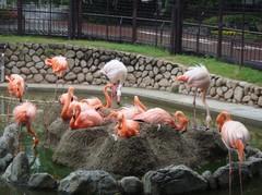 Flamingo20100618-4.JPG
