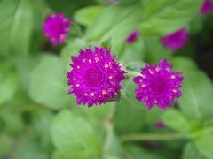 Flower20100821-1.JPG