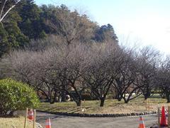 Kairakuen20101218-2.JPG