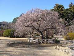Kairakuen20101218-5.JPG