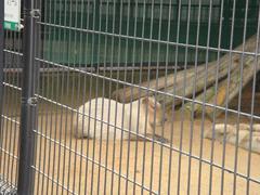 Kapybara20100618-2.JPG