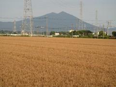 bakushu20100617.JPG