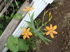flower20100801-2.JPG