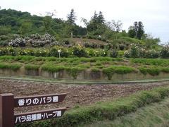 ibaraki-flowerpark4.JPG