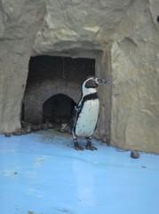 penguin20100618-1.JPG