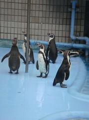 penguin20100618-2.JPG