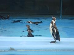 penguin20100618-3.JPG