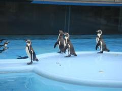 penguin20100618-4.JPG