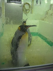 penguin20100618-5.JPG