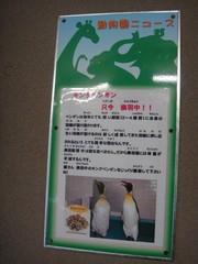 penguin20100618-6.JPG