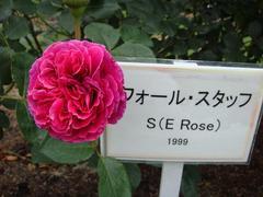 rose20100529-29-2.JPG