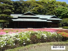 suwanochaya.JPG