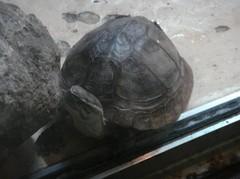 turtle20100618.JPG