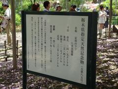 yaekokuryufuji2.JPG
